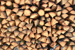 Σωρός του δάσους Στοκ Φωτογραφία