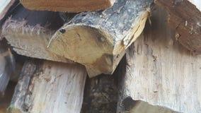 Σωρός του δάσους Στοκ Φωτογραφίες