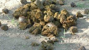 Σωρός του λιπάσματος αλόγων φιλμ μικρού μήκους