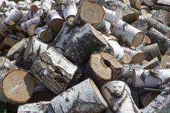 Σωρός του καυσόξυλου σημύδων Στοκ εικόνες με δικαίωμα ελεύθερης χρήσης