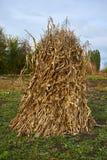 Σωρός του καλαμποκιού στον κήπο Στοκ φωτογραφία με δικαίωμα ελεύθερης χρήσης