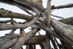 Σωρός του ξηρού ξύλου στην παραλία Στοκ Εικόνα