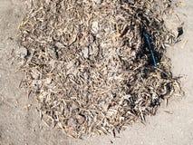 Σωρός του ξηρού σπόρου δέντρων, των πεσμένων φύλλων και των απορριμάτων στοκ φωτογραφίες