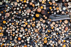 Σωρός του ξύλου πυρκαγιάς Στοκ Φωτογραφία