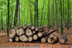 Σωρός του ξύλου Στοκ φωτογραφία με δικαίωμα ελεύθερης χρήσης