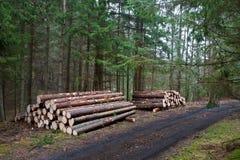 Σωρός του ξύλου Στοκ Εικόνες
