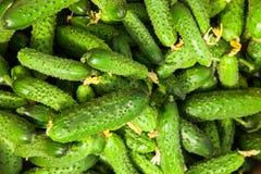 Σωρός του φρέσκου πράσινου αγγουριού Στοκ φωτογραφία με δικαίωμα ελεύθερης χρήσης