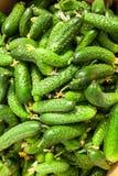 Σωρός του φρέσκου πράσινου αγγουριού Στοκ φωτογραφίες με δικαίωμα ελεύθερης χρήσης