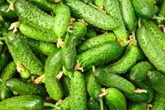 Σωρός του φρέσκου πράσινου αγγουριού Στοκ εικόνα με δικαίωμα ελεύθερης χρήσης