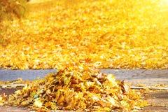 Σωρός των κίτρινων φύλλων φθινοπώρου Στοκ Εικόνα