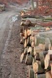 Σωρός των κούτσουρων ξυλείας Στοκ Φωτογραφία