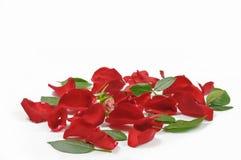 Σωρός των κόκκινων ροδαλών πετάλων και των φύλλων στην επίπεδη επιφάνεια Στοκ Εικόνα