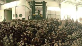 Σωρός των κώνων Ηλεκτρικό forklift που μεταφέρει τους κώνους πεύκων στην ξήρανση του γραφείου απόθεμα βίντεο