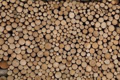 Σωρός των κλάδων δέντρων Στοκ φωτογραφία με δικαίωμα ελεύθερης χρήσης