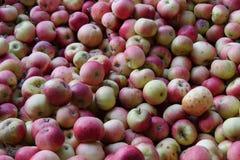 Σωρός των μήλων από τον οπωρώνα στοκ φωτογραφίες