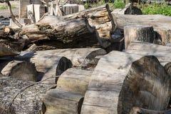 Σωρός των ξηρών παλαιών κούτσουρων Στοκ Εικόνες