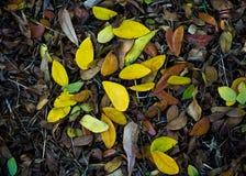 Σωρός των ξηρών φύλλων το φθινόπωρο Στοκ εικόνα με δικαίωμα ελεύθερης χρήσης