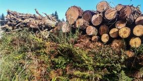 Σωρός των ξύλινων κούτσουρων Στοκ εικόνα με δικαίωμα ελεύθερης χρήσης