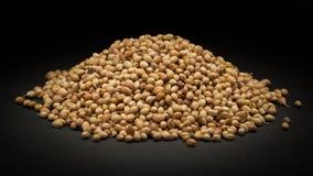 Σωρός των οργανικών ξηρών σπόρων κορίανδρου (Coriandrum sativum) Στοκ φωτογραφία με δικαίωμα ελεύθερης χρήσης