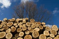 Σωρός των πριονισμένων κορμών δέντρων Στοκ Εικόνα