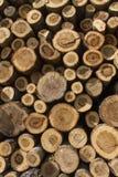 Σωρός των πριονισμένων κορμών δέντρων Στοκ Εικόνες