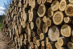 Σωρός των πριονισμένων κορμών δέντρων Στοκ Φωτογραφία