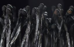 Σωρός των ραβδιών αντιστοιχιών, σωρός των μμένων αντιστοιχιών Στοκ εικόνες με δικαίωμα ελεύθερης χρήσης
