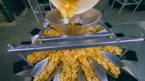 Σωρός των τηγανισμένων τσιπ που περιέρχονται σε ένα ταξινομώντας εμπορευματοκιβώτιο σε μια δυνατότητα απόθεμα βίντεο