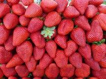 Σωρός των φραουλών Στοκ εικόνα με δικαίωμα ελεύθερης χρήσης