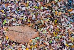 Σωρός των φύλλων στο έδαφος στο υπόβαθρο φθινοπώρου Στοκ φωτογραφία με δικαίωμα ελεύθερης χρήσης