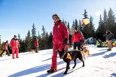 Σωτήρας και το σκυλί υπηρεσιών του Στοκ Εικόνα