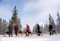 Σωτήρες υπηρεσιών διάσωσης βουνών με τα σκυλιά διάσωσης Στοκ Εικόνα
