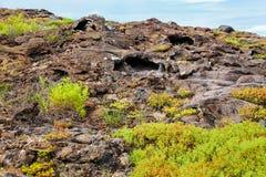 Σωλήνες λάβας στο κινεζικό νησί καπέλων, Galapagos εθνικό πάρκο, Ecuad Στοκ Φωτογραφία