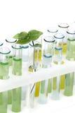 Σωλήνες γυαλιού με τις χρωματισμένες λύσεις Στοκ Φωτογραφία
