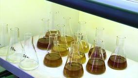 Σωλήνες στο ερευνητικό εργαστήριο απόθεμα βίντεο