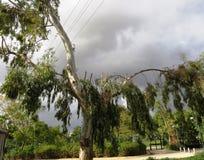 σόλο δέντρο Στοκ εικόνα με δικαίωμα ελεύθερης χρήσης