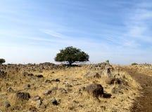 σόλο δέντρο Στοκ Εικόνα