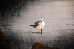 Σόλο πουλί Στοκ Εικόνα
