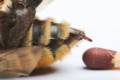 Σύγκριση του τσιμπήματος της μέλισσας με την αντιστοιχία στοκ φωτογραφία