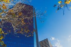 Σύγχρονα κτήρια πολυόροφων κτιρίων στην κεντρική επιχείρηση Districy ν του Σίδνεϊ Στοκ φωτογραφία με δικαίωμα ελεύθερης χρήσης