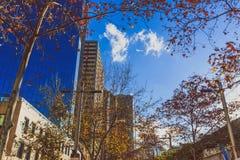 Σύγχρονα κτήρια πολυόροφων κτιρίων στην κεντρική επιχείρηση Districy ν του Σίδνεϊ Στοκ Φωτογραφίες