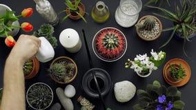 Σύγχρονη μαύρη επιτραπέζια διακόσμηση Κάκτος, succulent εγκαταστάσεις, τουλίπες, και διακοσμητικοί βράχοι E απόθεμα βίντεο