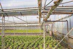 Σύγχρονο αγρόκτημα για την ανάπτυξη του μαρουλιού Στοκ Φωτογραφίες
