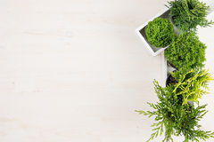 Σύγχρονο εσωτερικό με τις πράσινες νέες εγκαταστάσεις κωνοφόρων στο άσπρο κιβώτιο στο μπεζ ξύλινο υπόβαθρο πινάκων με τη διαστημι Στοκ φωτογραφίες με δικαίωμα ελεύθερης χρήσης