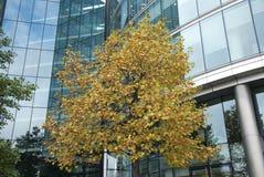 Σύγχρονο κτήριο δέντρων Στοκ φωτογραφίες με δικαίωμα ελεύθερης χρήσης