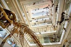 Σύγχρονο μουσείο της μούσας φυσικής ιστορίας σε Trento που σχεδιάζεται κοντά Στοκ Εικόνες