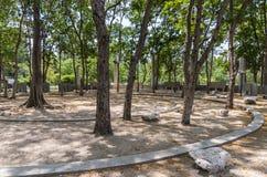 Σύγχρονο συγκεκριμένο αμφιθέατρο κάτω από το δέντρο στοκ εικόνες
