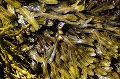 Σύγχυση θάλασσας Στοκ εικόνες με δικαίωμα ελεύθερης χρήσης