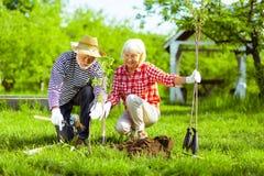 Σύζυγος που βοηθά τη σύζυγό του με το σκάψιμο του εδάφους πρίν φυτεύει τα δέντρα στοκ φωτογραφίες με δικαίωμα ελεύθερης χρήσης