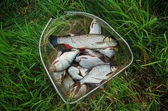 σύλληψη των ψαριών Στοκ εικόνες με δικαίωμα ελεύθερης χρήσης